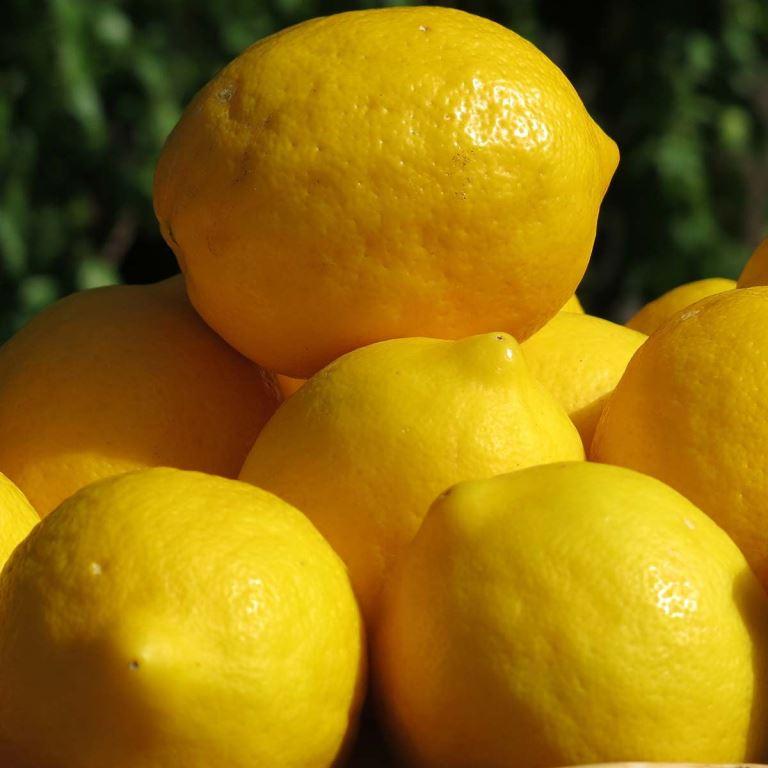 Limun- Meyer Improved